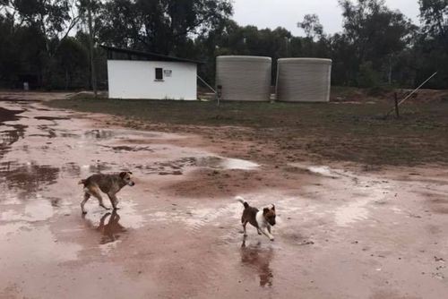 Rain at a farm in Oxley, in the Riverina district over the weekend. Picture: Facebook Toni Murie-Smith