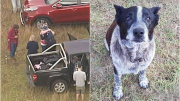 'Max' stayed by side of missing girl for 16 hours