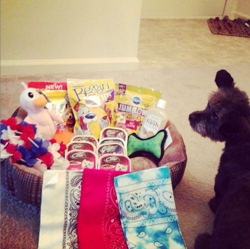 Chester goes on a shopping spree. (Instagram @chestersfinaljourney)