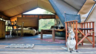 Nightfall Wilderness Camp glamping tent with wallaby on the patio.