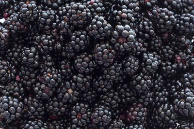 Blackberries: 5g sugar per 100g