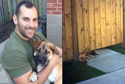 Nathan Cirillo's dogs