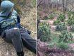 Teenagers caught in $2 million bush cannabis bust