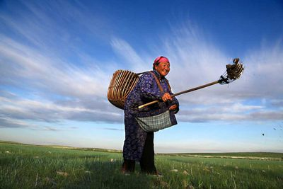 At the beginning of the day, a nomadic lady collects dried dung in the Ulaanbaatar area. She uses it to make fire for the needs of her family (Mongolia, 2014).