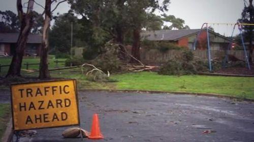 Wind gusts of 95km brought down trees across South Australia. (Virginia Langeberg/9NEWS)