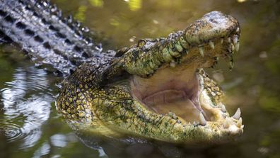 A Northern Territory man has been left with amputated and partially amputated toes after a crocodile attack.