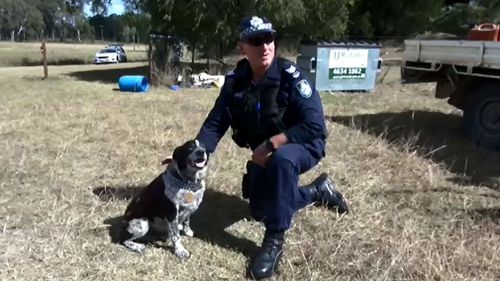 Honorary police dog Max is a very good boy. (Queensland Police Service)