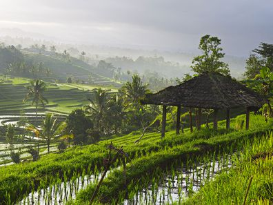 Rice paddy fields in Bali, Indonesia.