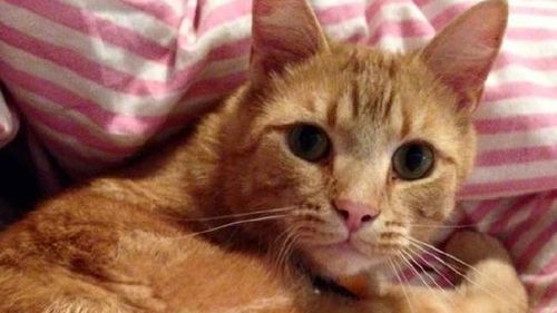 George the cat was fatally shot with arrows. (Supplied)