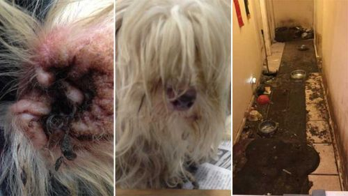 Animal cruelty exposed in shocking photographs of NSW puppy farm
