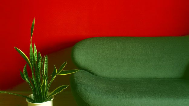 Red wall, green sofa