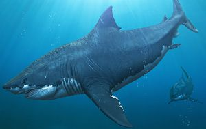 Megalodons became so big through cannibalism in utero: study