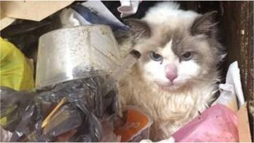 A Sydney man has pleaded guilty to animal cruelty charges after throwing his girlfriend's cat down a seven-storey garbage chute and failing to seek medical treatment for it.