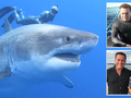 Swimming with sharks - what should we really be afraid of? A 60 Minutes special report