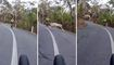 Cyclists' high-speed close call with scampering deer