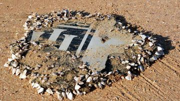The foul-smelling piece of debris found on a South African beach. (Schalk Lückhoff)