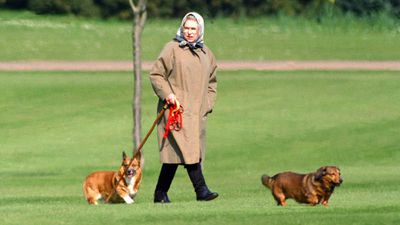 The Queen's last remaining corgi dies from cancer-related illness