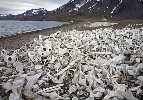 Old bleached whale bones in the Hornsund, Svalbard, Spitsbergen, Norway