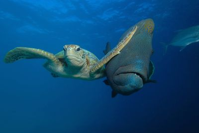 "<strong>Winner of The PADI Under The Sea Category: ""Slap"" by Troy Mayne</strong>"
