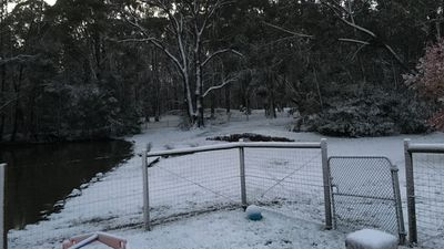 Snow had begun falling in some western and north-western towns of Victoria at around 4pm yesterday. (Jill Kratsis)
