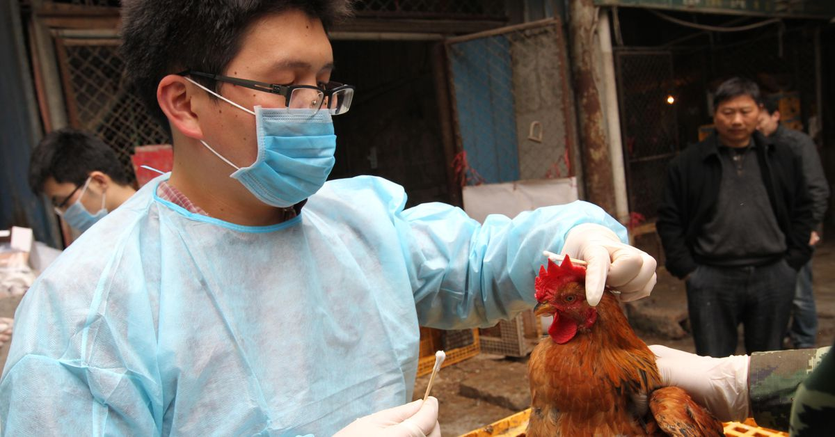 China reports human case of H10N3 bird flu a possible first – 9News