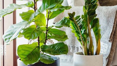 This genius company will deliver house plants to your door