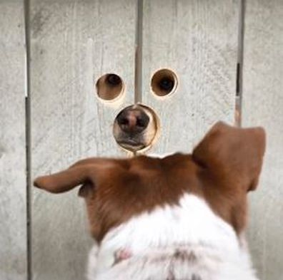 Hilarious TikTok trend allows pets to 'spy' on the neighbours