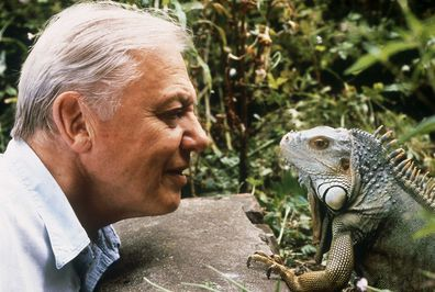 Attenborough said he misses going out on location.