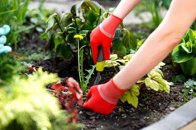 Gardening and weeding: 44 minutes