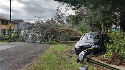 A car attempting a three point turn in front of a fallen tree suffered some serious damage when another car driving around a corner too fast rammed into it. (Supplied, Sylvia Lee)