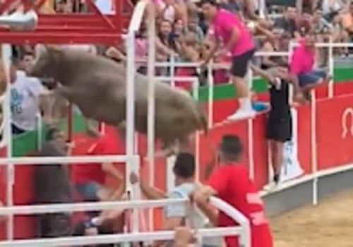 The bull wreaked havoc in the crowd before making its way out the arena to a nearby parking lot.