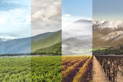 Elqui Valley Vineyards in Chile
