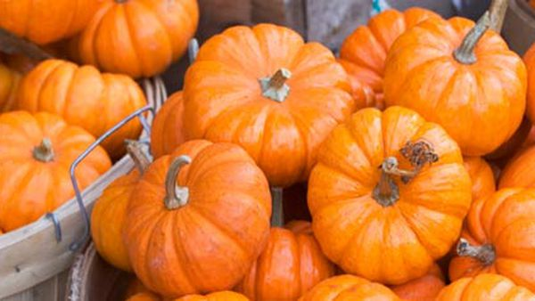 What's in season? Pumpkins