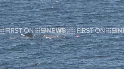 Whale freed after becoming trapped in shark nets off Gold Coast