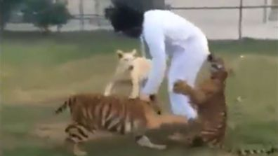 Keeping a tiger as a pet can really be a pain in the butt sometimes. Click through this gallery to see some of the outrageous things that can happen when you keep a big cat as a pet.