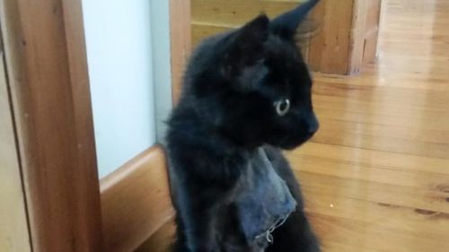 """Sooty's owner said the cat's killer """"won't get away"""" with the crime. (Facebook)"""
