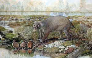 Bear-sized wombat roamed Australia 25 million years ago