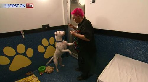 The program takes care of pets so they cannot be used against victims in abusive situations.