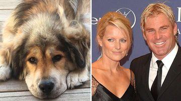 Shane Warne's ex Simone reveals family dog passed away in tribute post