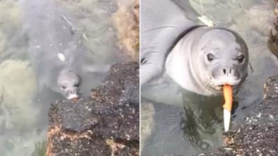 Knife-wielding seal sends message not to litter