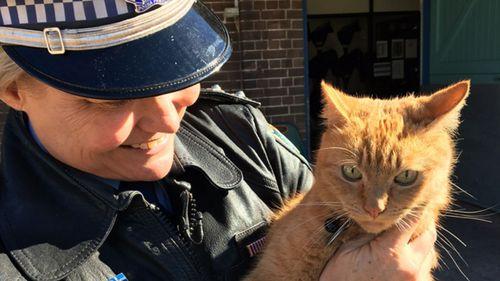 Meet the NSW police's feline officer, Troop Cat Ed