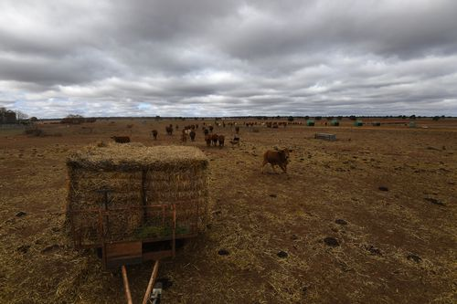 Australia is being gripped by a devastating drought that is tearing its way through rural properties.