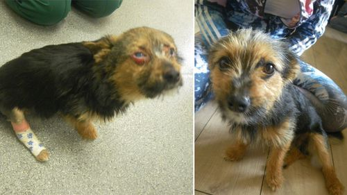 UK dog's 'miracle' recovery after being set alight, beaten and fed drugs by youths