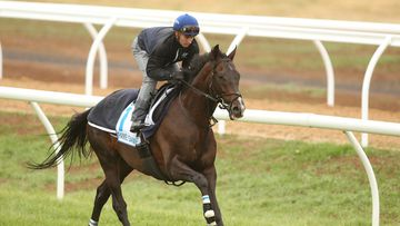 The punter has laid his final bet on Fame Game who will be ridden today by jockey Zac Purton. (AAP)