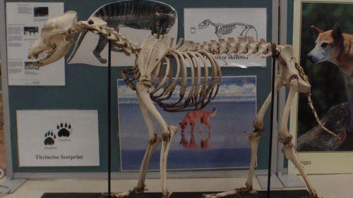 Among those taken were a Slow Loris skeleton and a full dog skeleton.