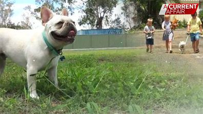 Happy ending for pup struck by Australia Post delivery driver