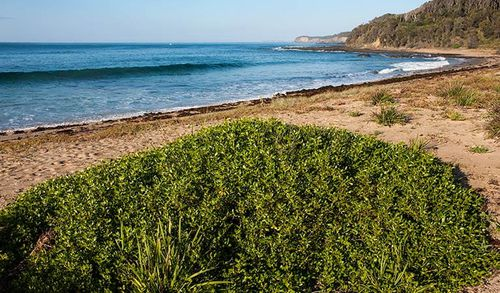 The snorkeller went missing at Richmond Beach, in the Murramarang National Park in Shoalhaven, NSW.
