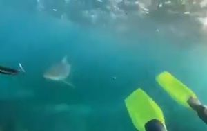 Shark filmed swimming after spearfishing teens