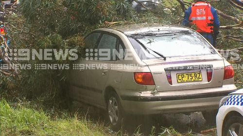 One of the cars trapped under the fallen tree in North Ryde.