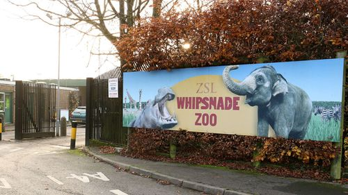 UK zookeeper 'covered in blood' after rhino turns on him inside enclosure